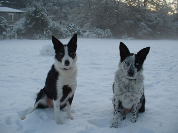 A pair of cold dogs.JPG